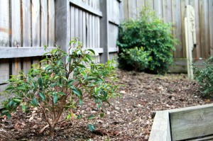 Our weeded garden